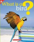 What is a Bird
